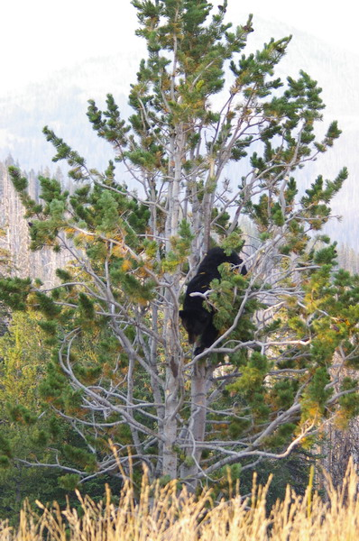 ...her 2 cubs were high up in a neighbouring tree