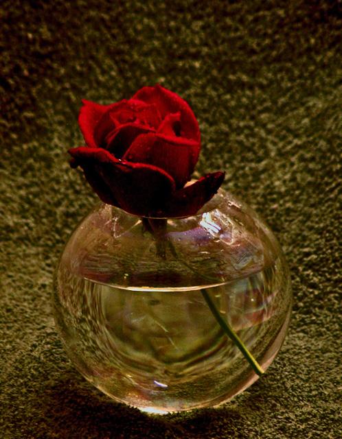 Single Red Rose.jpg