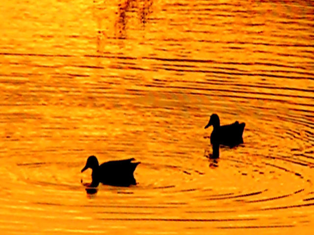 Duck Pond at Sunset3.jpg