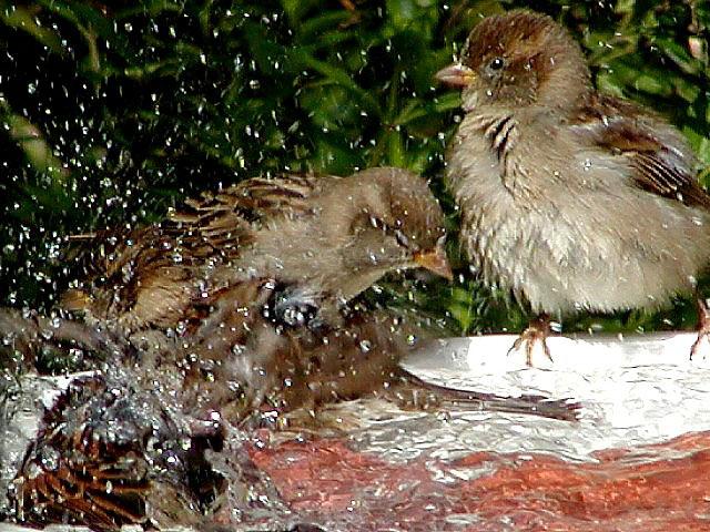 Splish Splash.jpg