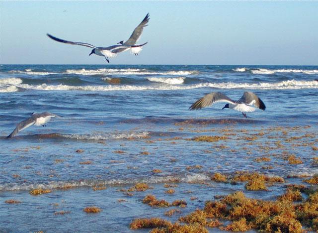 Texas Gulf Coast JPG
