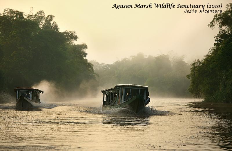 Morning mist in Agusan Marsh