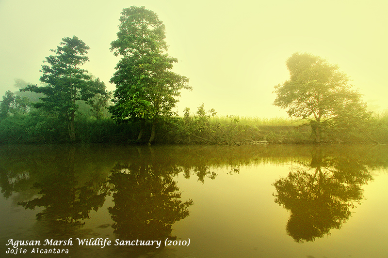 Agusan Marsh on a misty morning