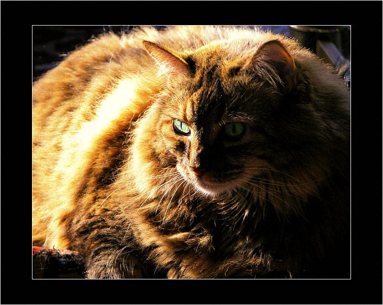 Tyger, Tyger, Burning Bright...   (April, 1995 - August 12, 2009)