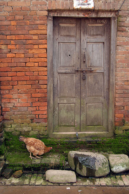 Chicken by a Door Bhaktapur