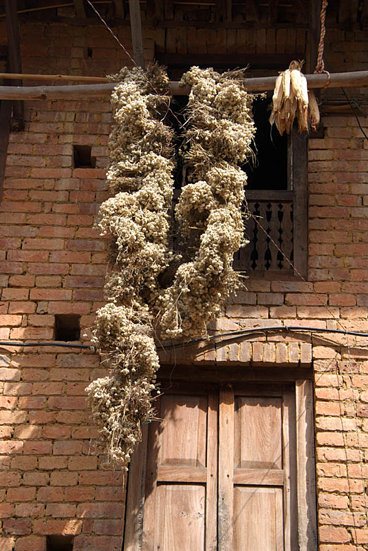 Flowers and Corn Drying Bhaktapur