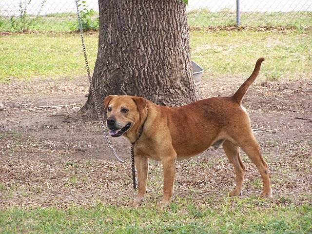 Max, Marilyns dog