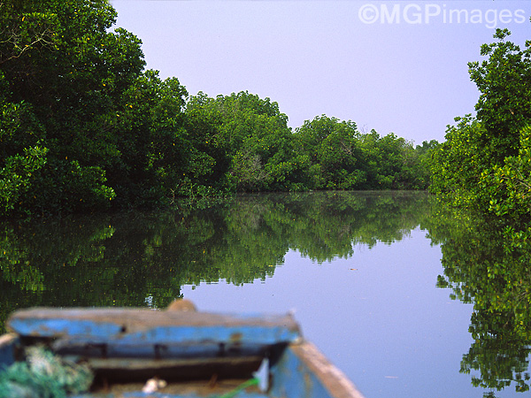 Mangroves, Casamance, Senegal