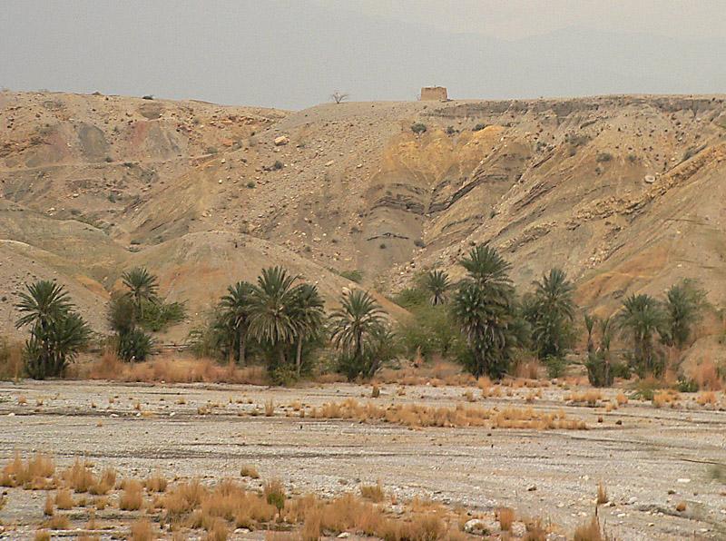 Some more green in the barren landscape - 434.jpg