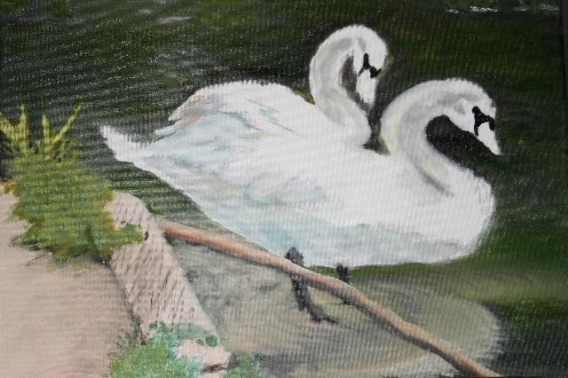 JoshMeyers Swans closeup.jpg