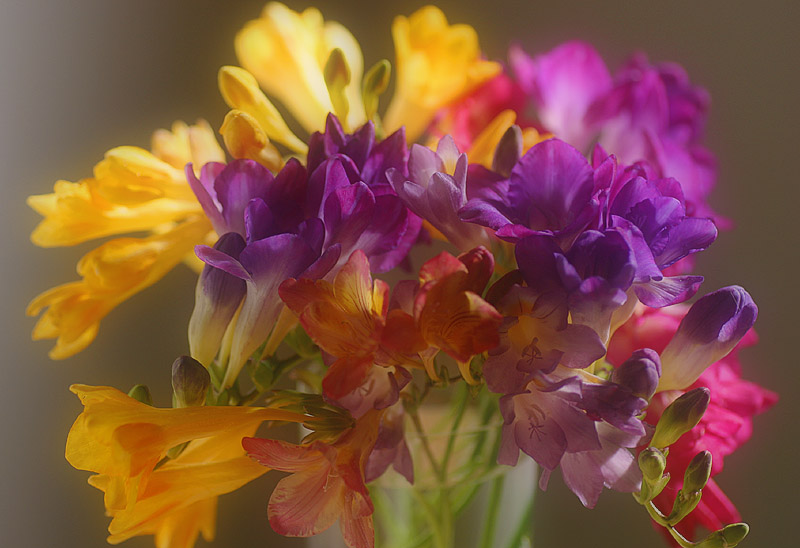 August 25. Freesias from my garden