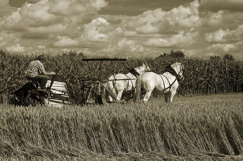 Harvest (4)