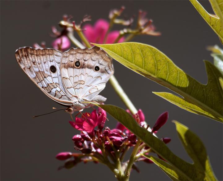Butterfly on Red Flower Horizontal.jpg