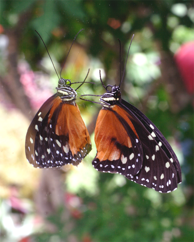 Reflections  of a Monarch.jpg