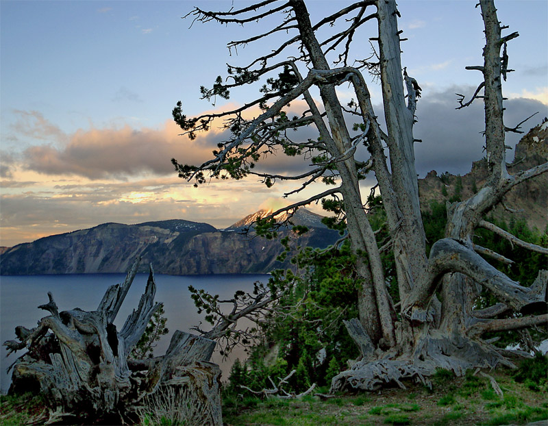 Crater Lake Mountains at Sunset with dead tree.jpg