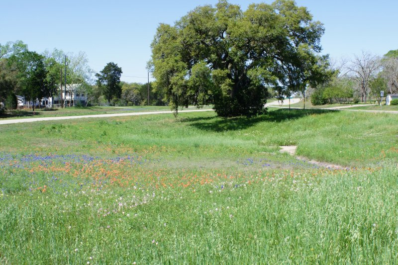 Wildflowers at an Intersection in LaGrange TX