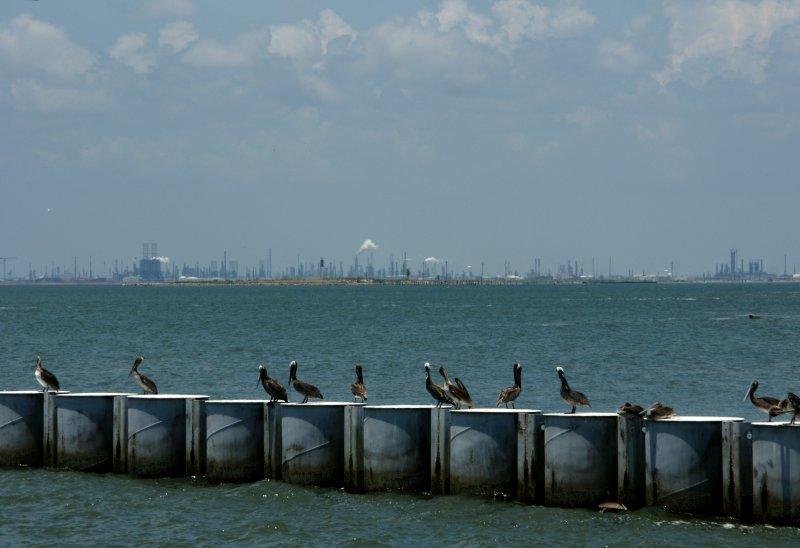 Pelicans Take a Break & Dolphin Swims Nearby