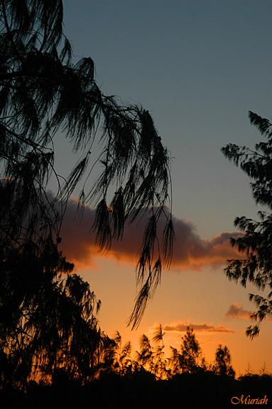 Sunset Sea Breeze -04-08-06