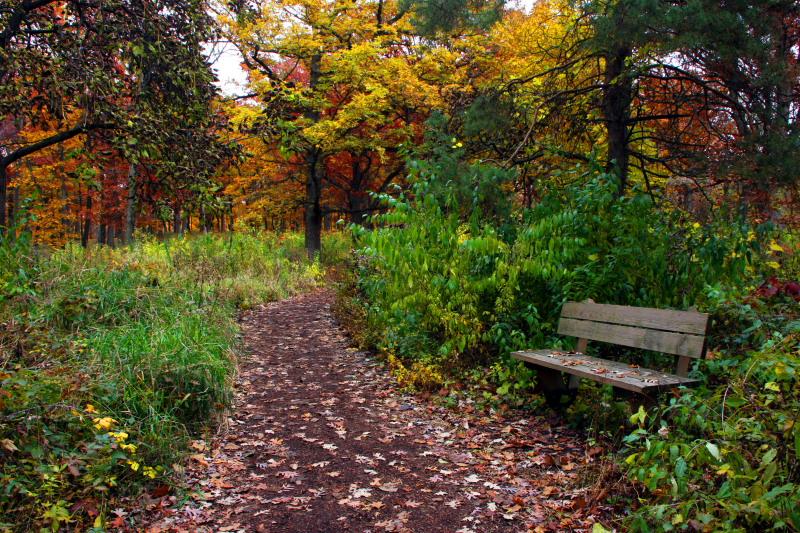 Morton Arboretum - Bench for admiration