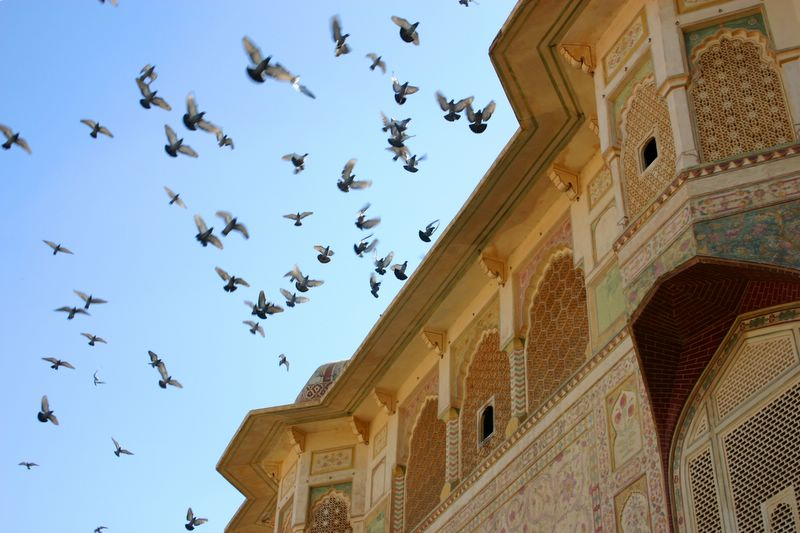 We watch as they fly, Amber Palace, Jaipur