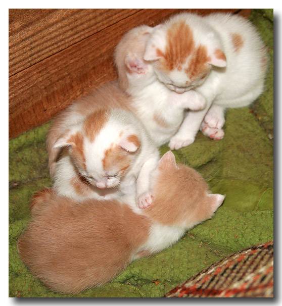 Kittens at one month old