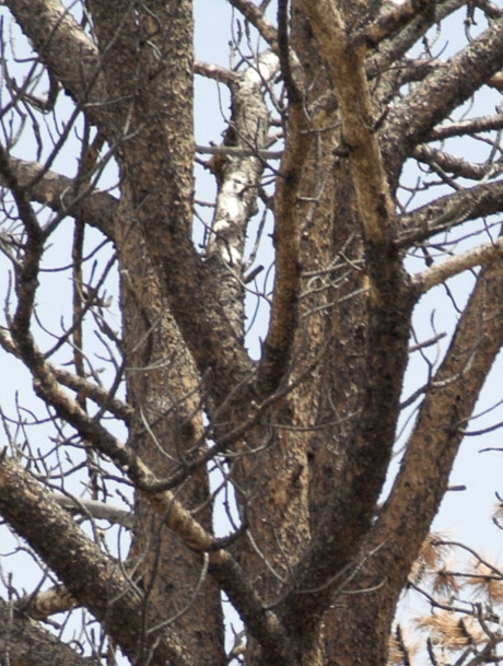 zzc3B_MG_0865 Tree 238mm.jpg