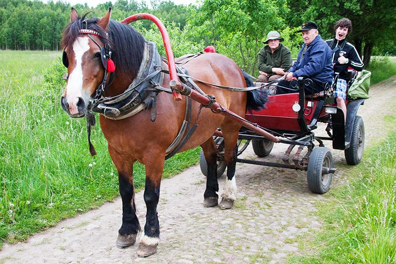 Horse-drawn Tour 2