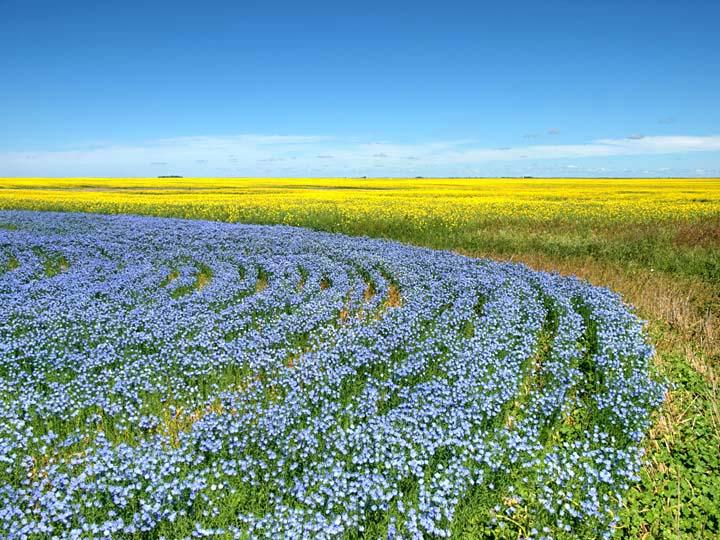 Prairie 1860