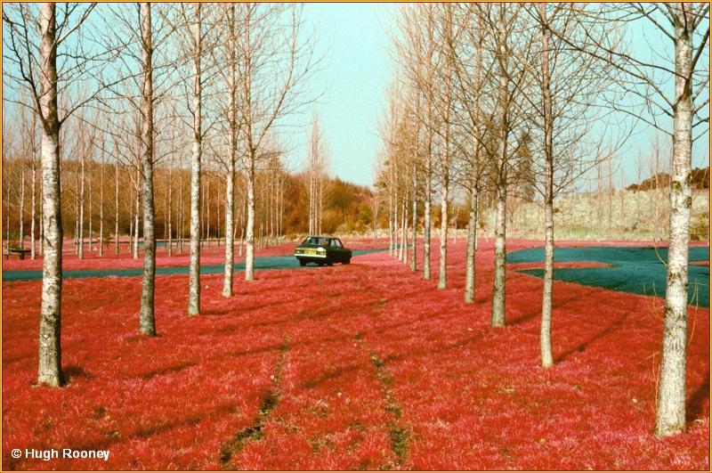 MONAGHAN - ROSSMORE FOREST PARK