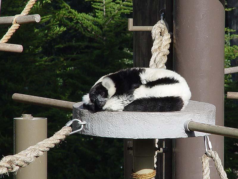 White & Black - Have a Nap