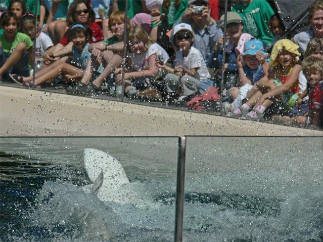 Splashing the Crowd