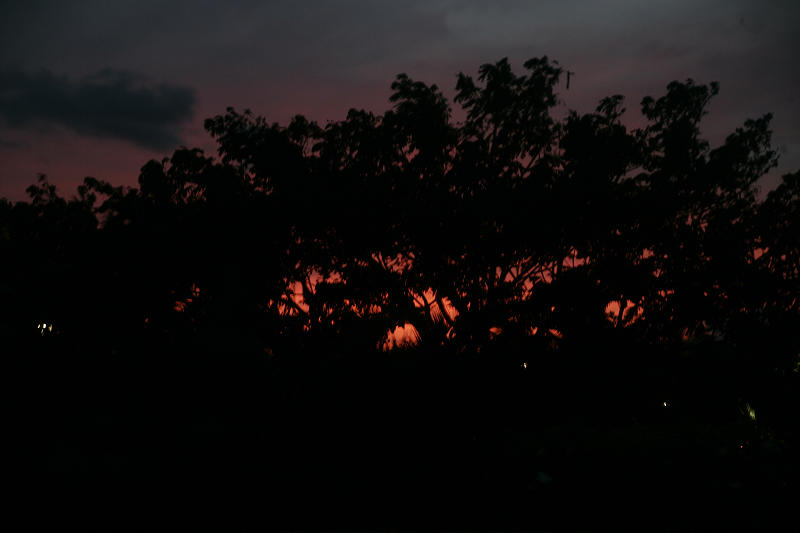 1Sunset Tree Silhouette.jpg
