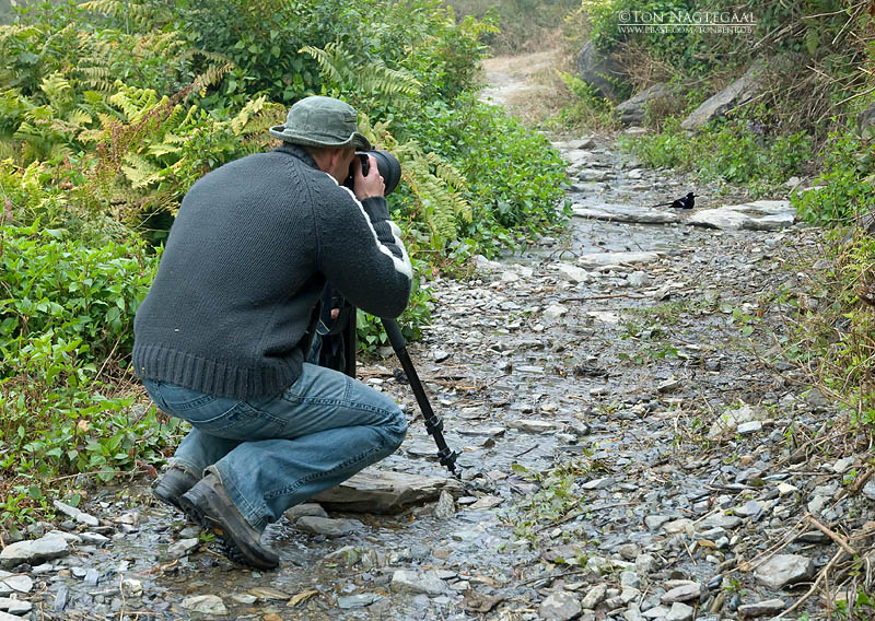 Rob making pictures from Spotted Forktail