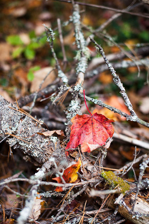 Leaf Caught on Fallen Branch
