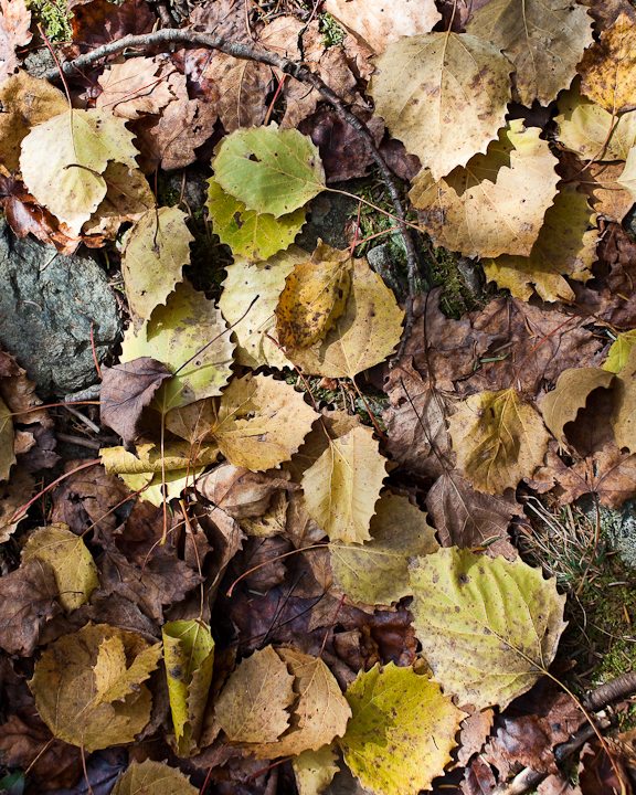 Fallen Leaves and Curved stick