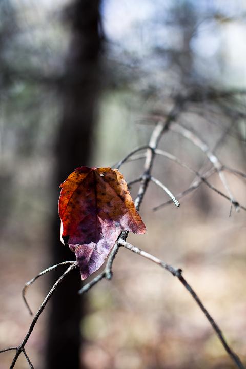 Last Brown Leaf #1