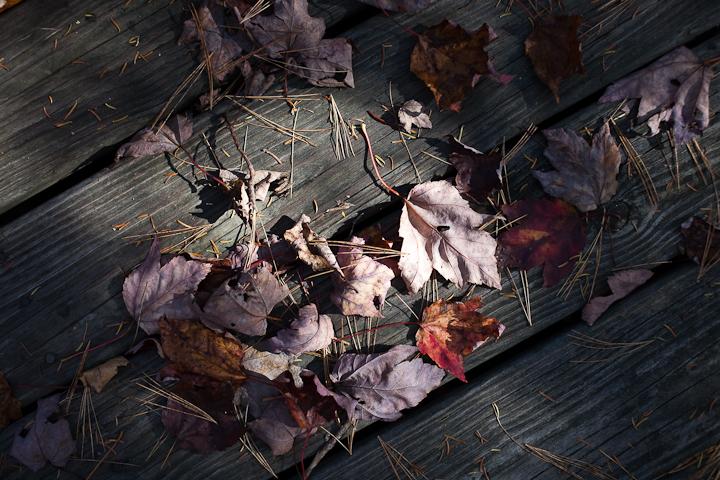 Leaves on the Boardwalk #1