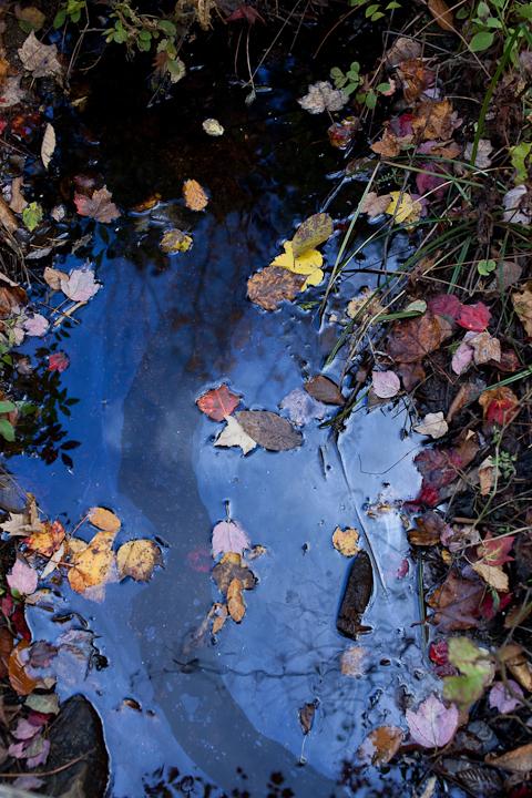 Fallen Leaves on Water #2