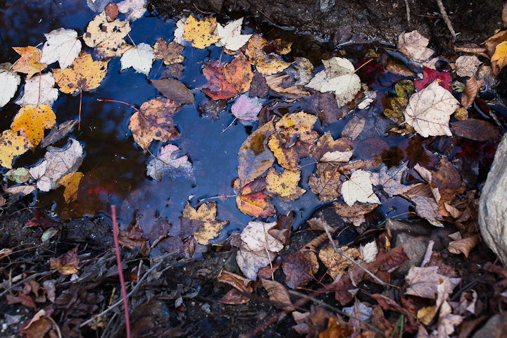 Fallen Leaves on Water #3