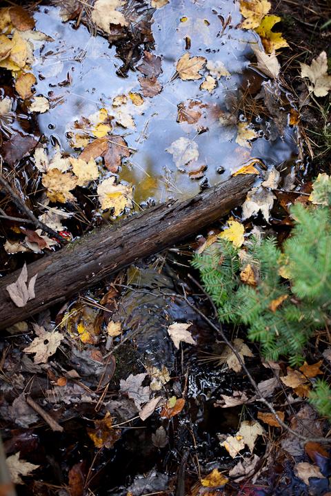 Fallen Leaves on Water #6
