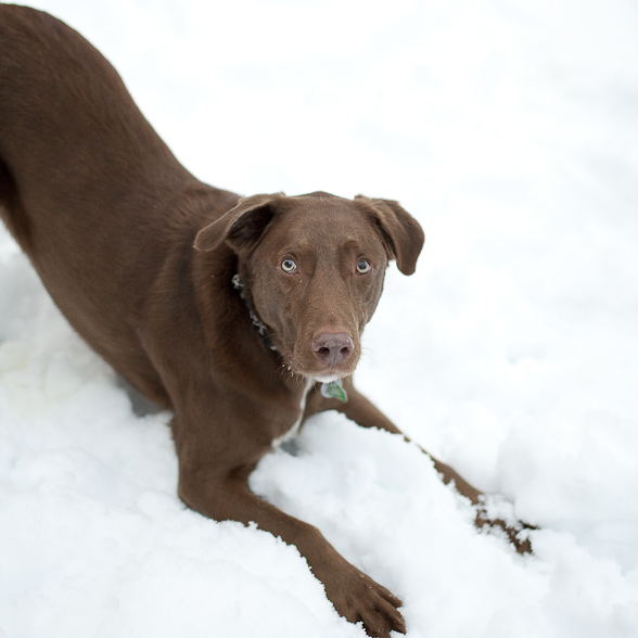 Spicer Playing in the Snow #2