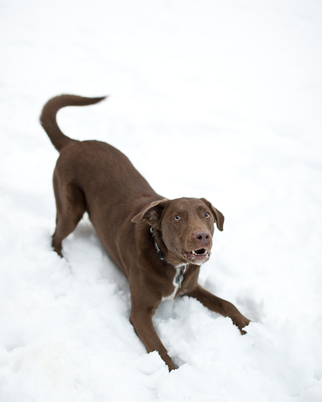 Spicer Playing in the Snow #4