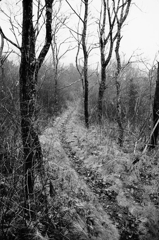 Path in Fog Faux IR