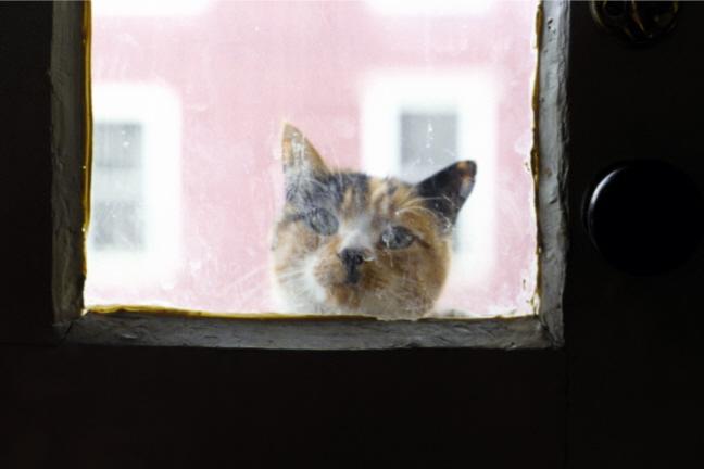 Cat Visiting