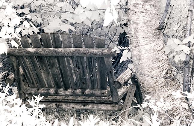 Bench by Birch