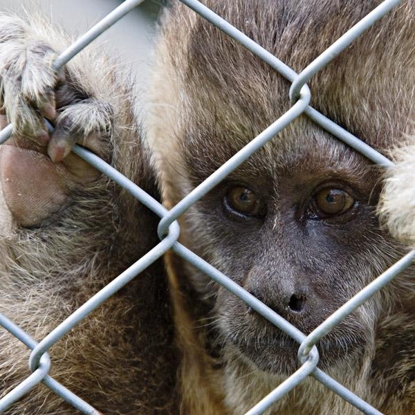 Caged *