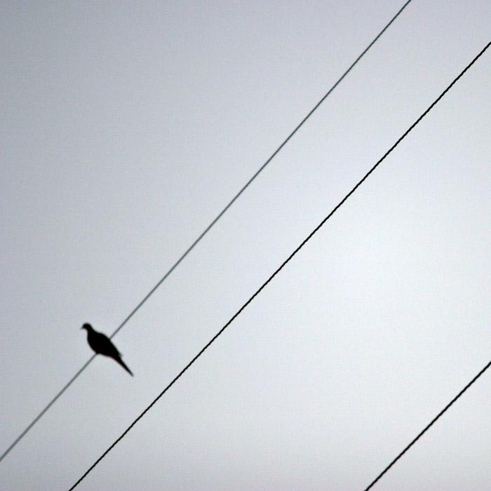 A bird (*)