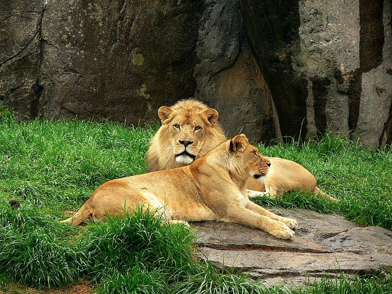 Lions Sala(f)[rip] & Riley(m)