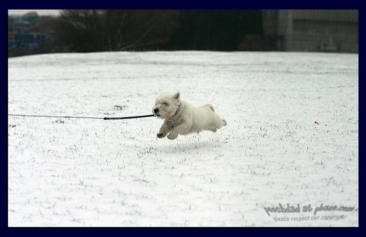 12032006  terrier coming!