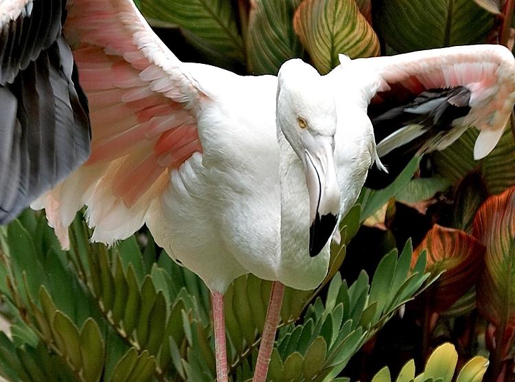 Flamingo7_Ver3.jpg